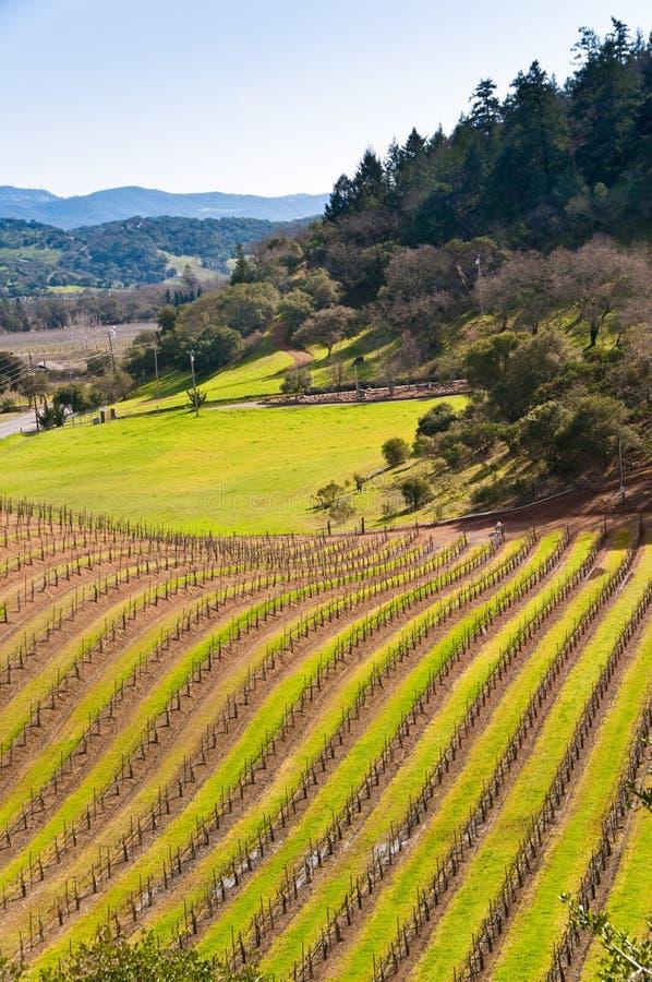 Vineyards at Napa, California. royalty free stock images