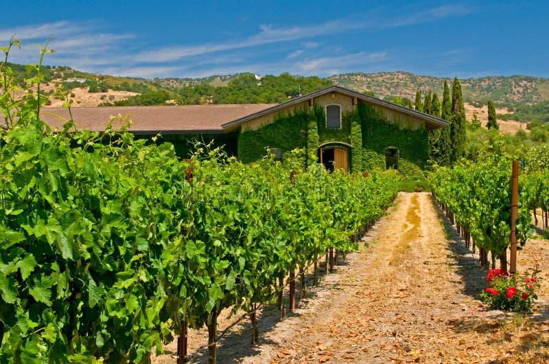 Vineyards of napa valley stock photo