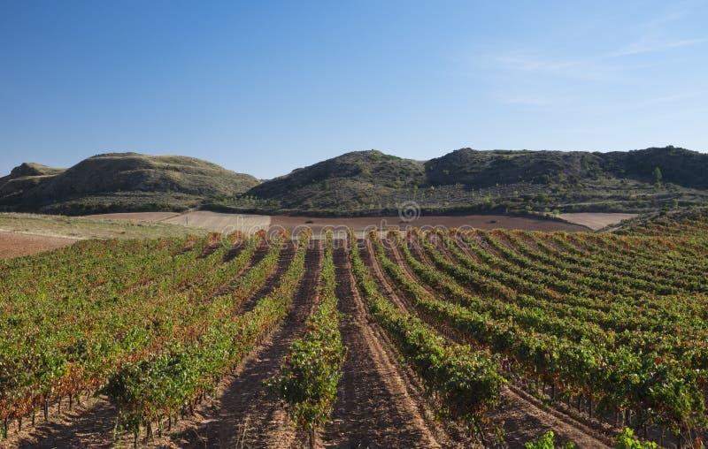 Vineyards in Navarre, Barbarin, Spain stock photography