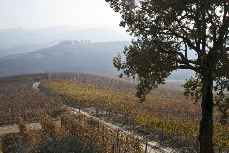 Vineyards near Barolo, Piemonte Italy