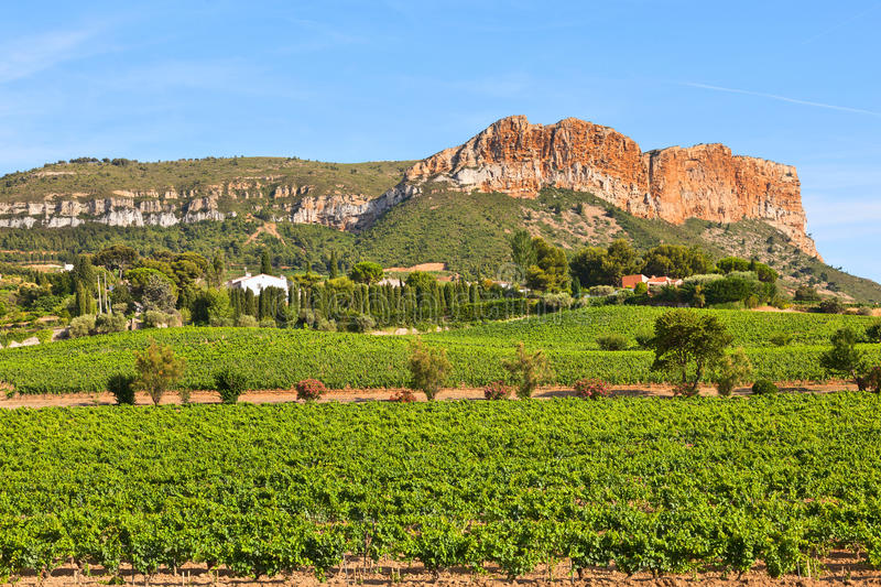 Vineyards near Cassis, France. royalty free stock photography