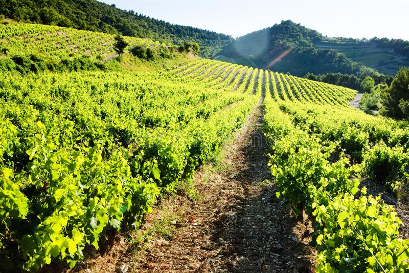 Vineyards near Gigondas, Provence, France. Outdoor, outdoors, outside, exterior, exteriors, europe, western, provence-alpes-cote, dazur, vaucluse, cotes, du royalty free stock photos