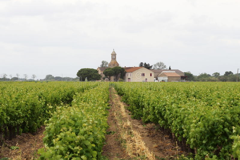 Vineyards near Montcalm in French Camargue royalty free stock images