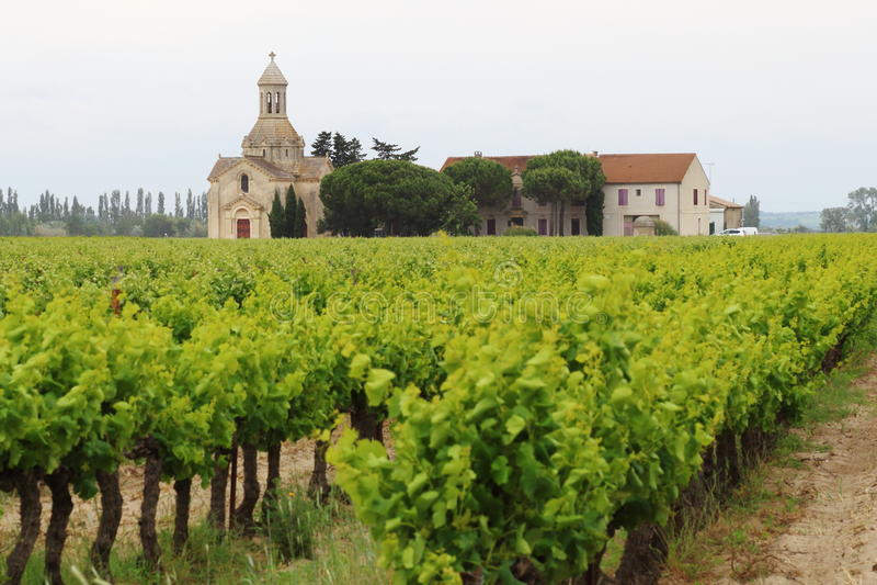 Vineyards near Montcalm, Vauvert, France royalty free stock images
