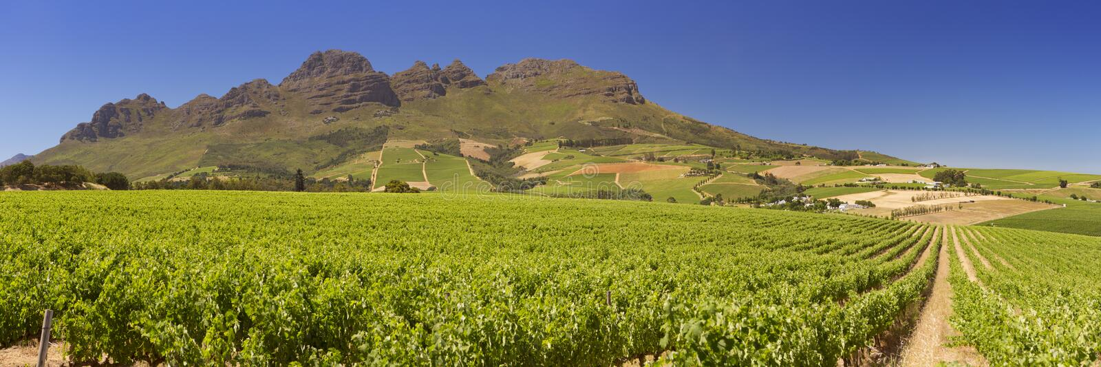 Vineyards near Stellenbosch in South Africa royalty free stock images