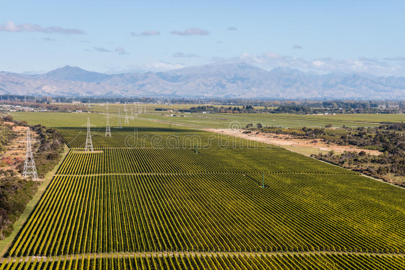 Vineyards in New Zealand royalty free stock photo