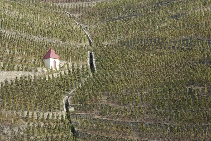 Vineyards in northern Rhone Valley. The Northern Rh�ne is most famed as the home of Syrah. The hillside appellation of C�te R�tie in the far north royalty free stock image