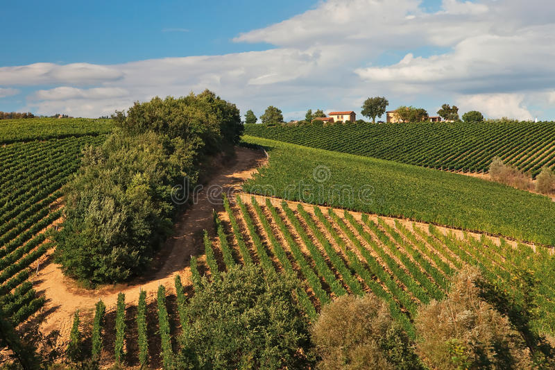 Vineyards over hills at Chianti. royalty free stock photography