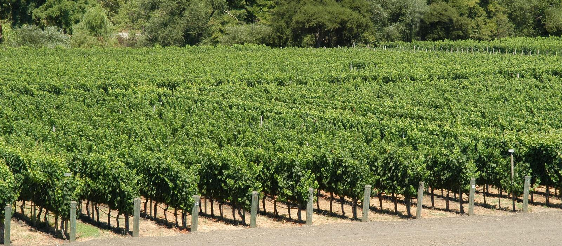 Vineyards panorama stock photography