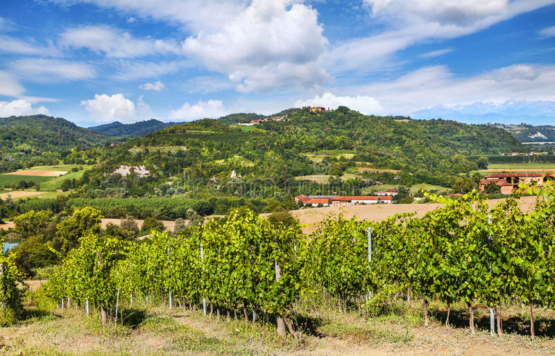Vineyards of Piedmont, Italy royalty free stock images