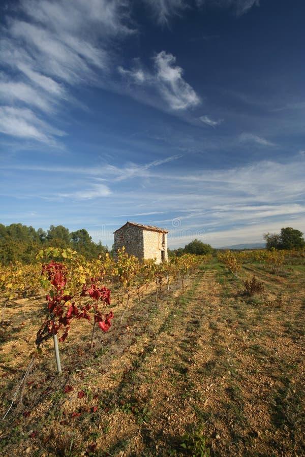 Vineyards, Provence, France stock images