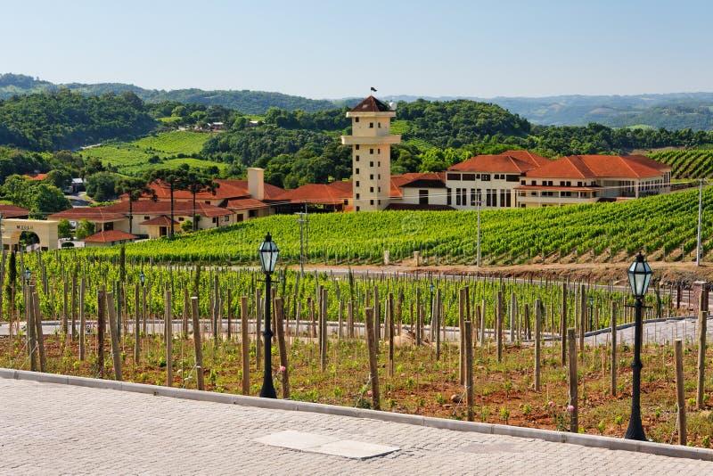 Vineyards in Rio Grande do Sul stock photo