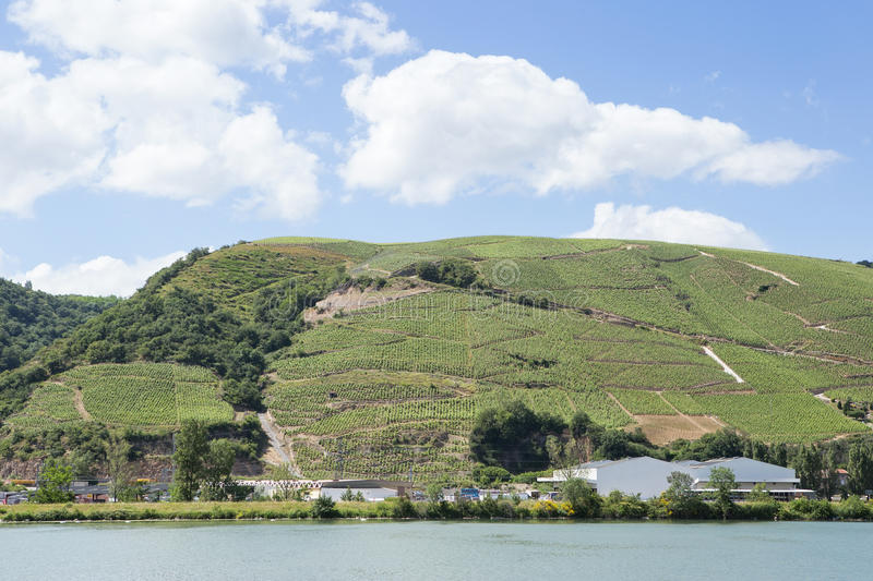 Vineyards by the River Rhone, France royalty free stock photos