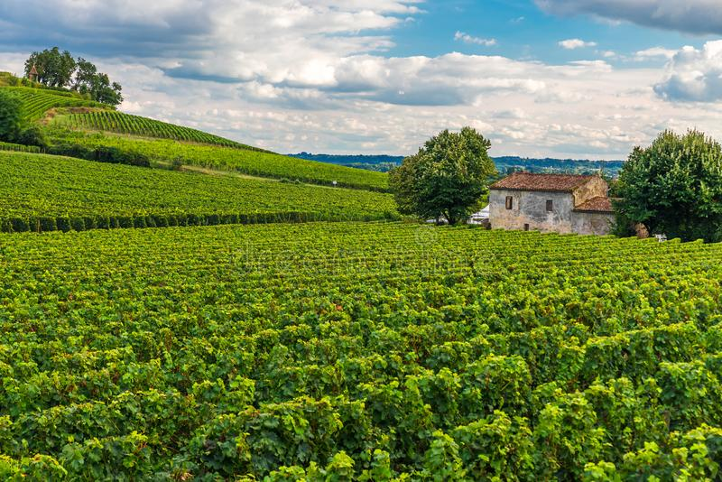 Vineyards of Saint Emilion, Bordeaux Wineyards in France royalty free stock image