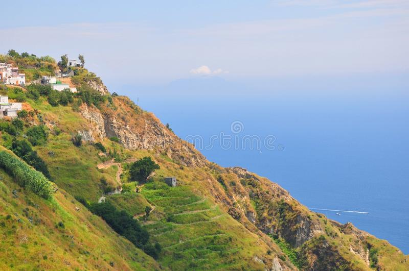 Vineyards at the sea ischia Italy royalty free stock images
