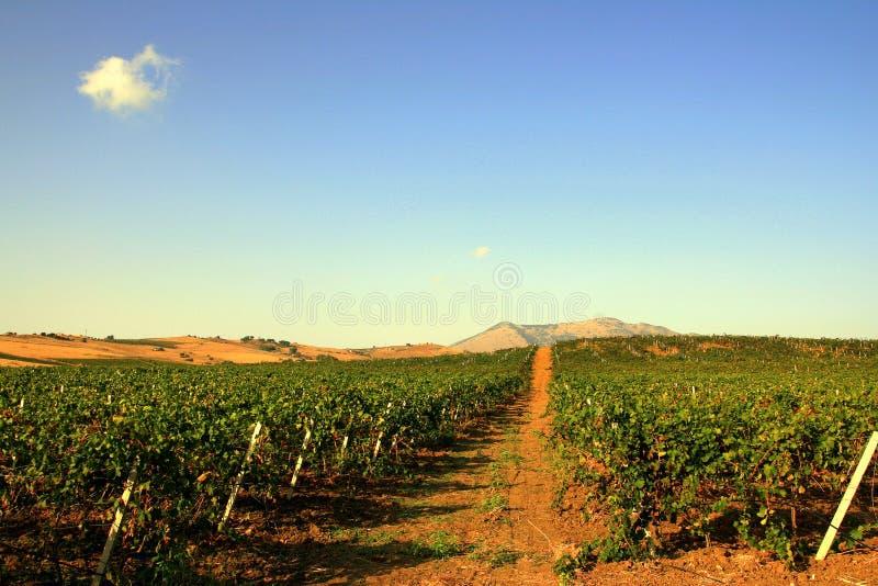 Vineyards & Sky, Sicily stock images