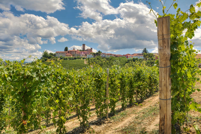 Download Vineyards And Small Town. Italy. Royalty Free Stock Photo - Image: 23395475