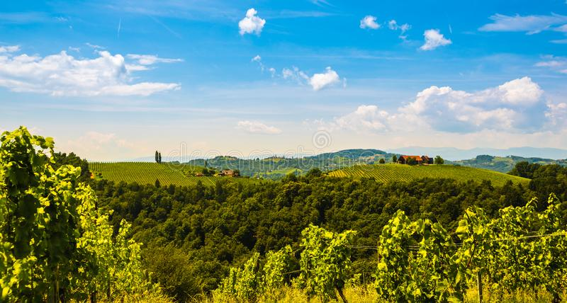 Vineyards in south styria in Austria. Landscape of Leibnitz area from Kogelberg. Tourist destination, Green hills of grape crops and mountains royalty free stock photo
