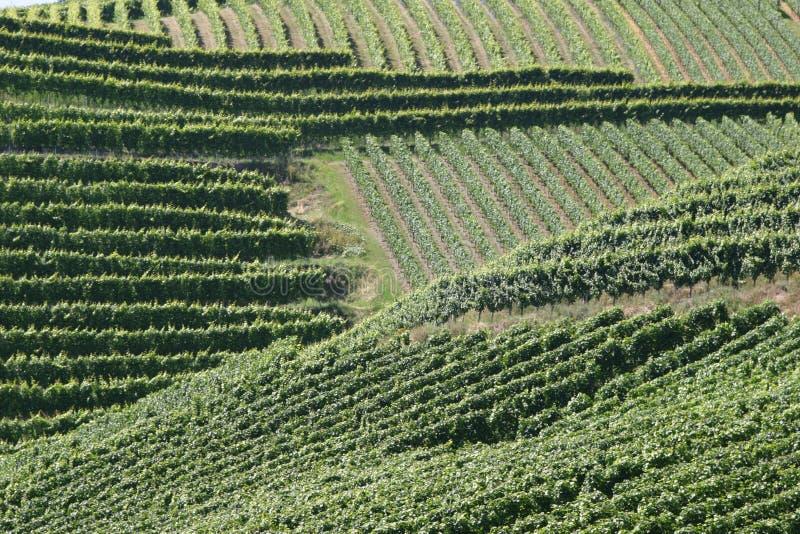 Vineyards stripes stock image
