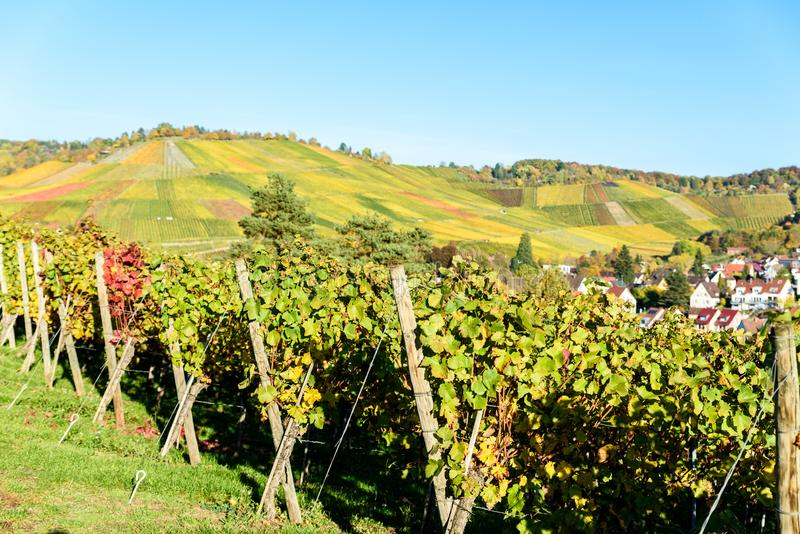 Vineyards at Stuttgart, Uhlbach at the Neckar Valley - beautiful landscape in autum in Germany stock photography