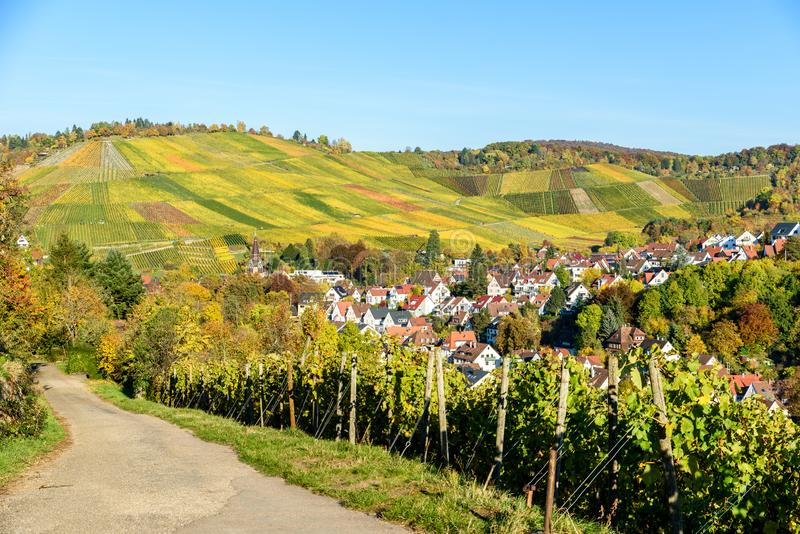Vineyards at Stuttgart, Uhlbach at the Neckar Valley - beautiful landscape in autum in Germany stock images