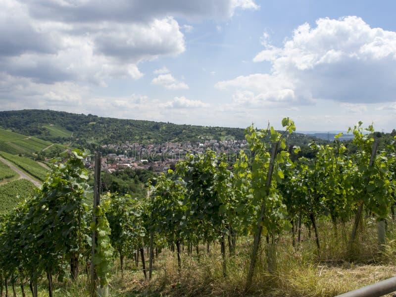 Vineyards in Stuttgart royalty free stock photo