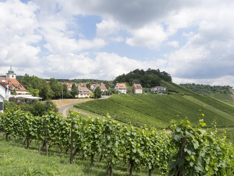 Vineyards in Stuttgart royalty free stock images