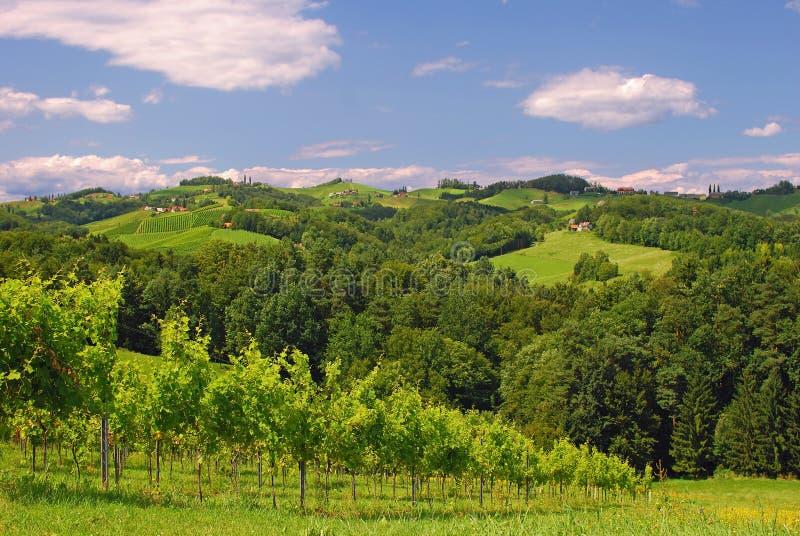 Download Vineyards In Styria,Austria Stock Photo - Image: 22495386
