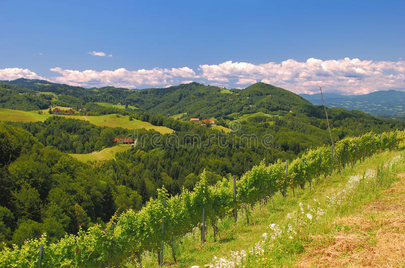 Vineyards in Styria,Austria. Vineyards in the styrian tuscany near leutschach,styria,austria royalty free stock images