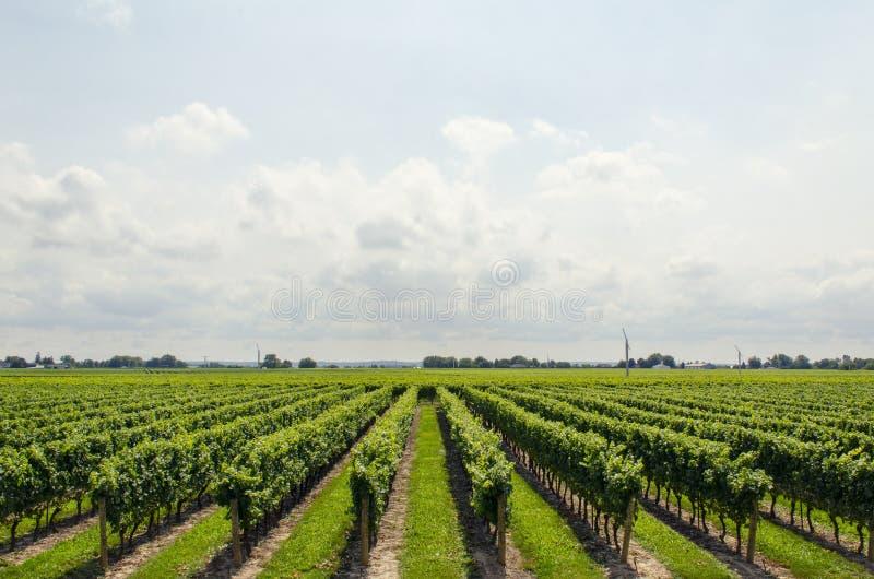 Vineyards stock photos
