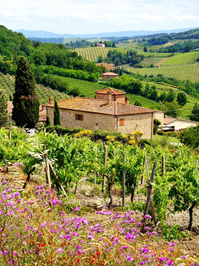 Vineyards of Tuscany. View through vineyards with stone house, Tuscany, Italy royalty free stock images
