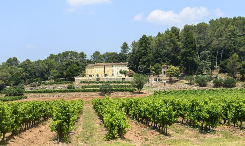 Download Vineyards In Var (Provence) Stock Photo - Image of field, landscape: 37281646