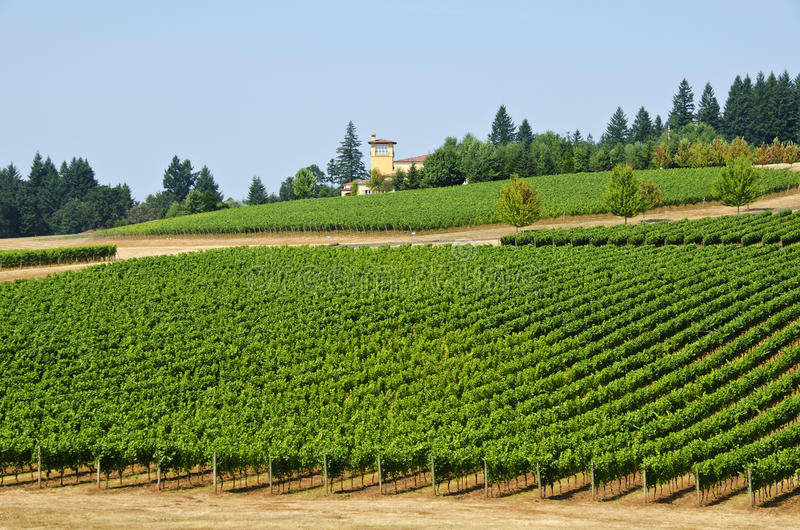 Download Vineyards In The Willamette Valley Oregon Stock Image - Image: 21324931