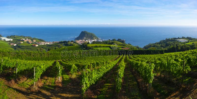 Vineyards and wine production with the Cantabrian sea in the background. Getaria royalty free stock photo
