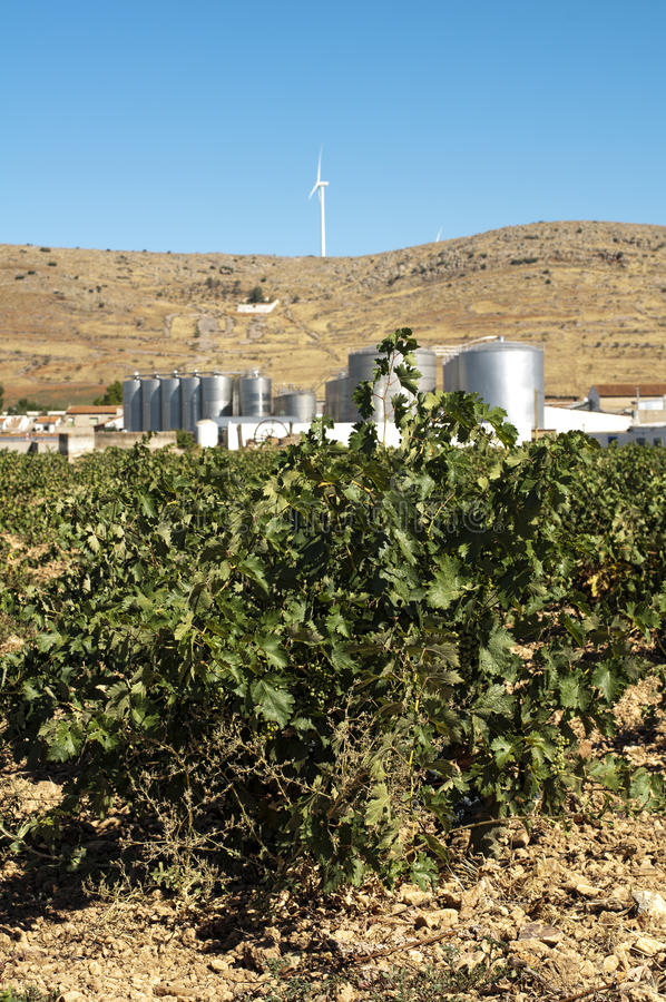 Vineyards and winery factory royalty free stock images