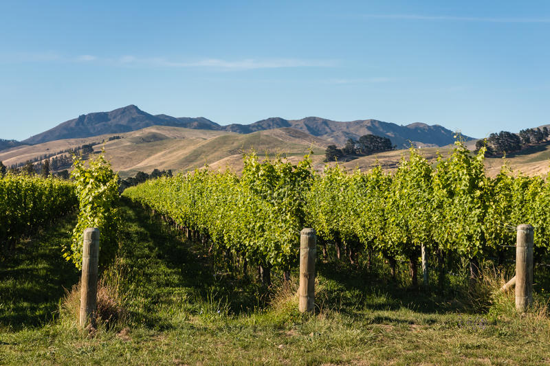 Vineyards at Wither Hills, New Zealand stock images