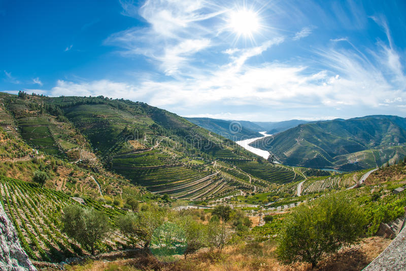 Vineyars in Douro Valley. Terraced vineyards in Douro Valley, Alto Douro Wine Region in northern Portugal, officially designated by UNESCO as World Heritage Site royalty free stock images