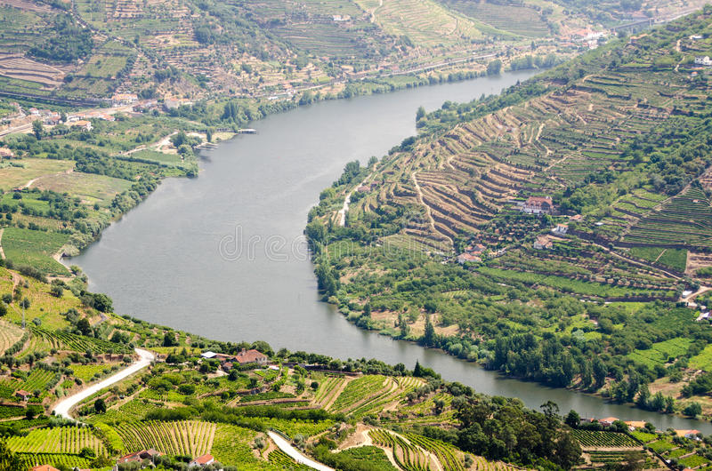 Vineyars in Douro Valley. Terraced vineyards in Douro Valley, Alto Douro Wine Region in northern Portugal, officially designated by UNESCO as World Heritage Site royalty free stock photo