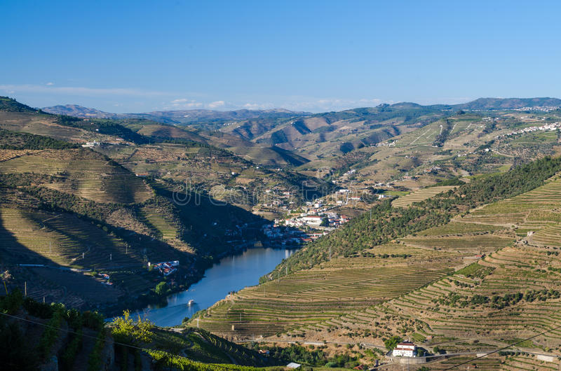 Vineyars in Douro Valley. Terraced vineyards in Douro Valley, Alto Douro Wine Region in northern Portugal, officially designated by UNESCO as World Heritage Site royalty free stock image