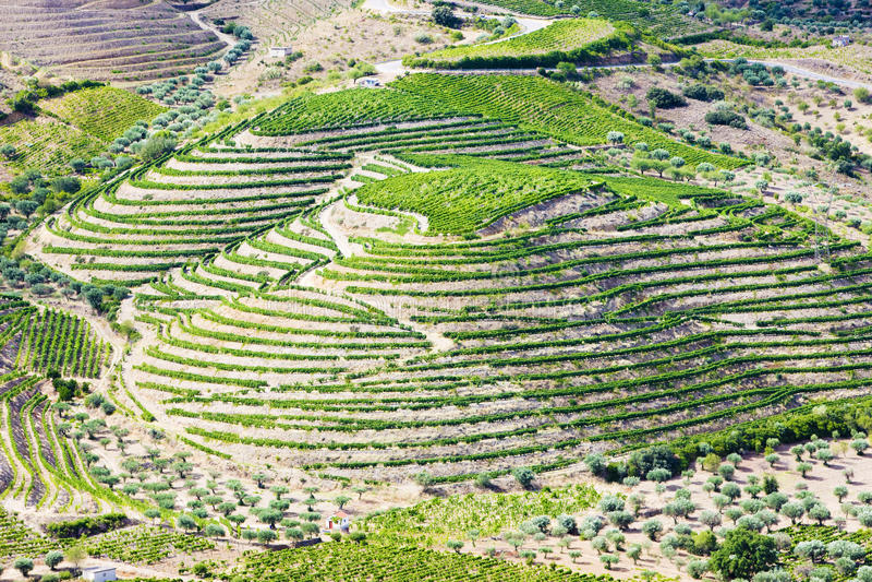Vineyars en vallée de Douro photographie stock