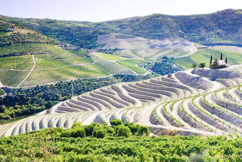 vineyars en vall?e de Douro, Portugal image libre de droits