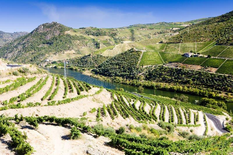 vineyars en vall?e de Douro, Portugal photo libre de droits