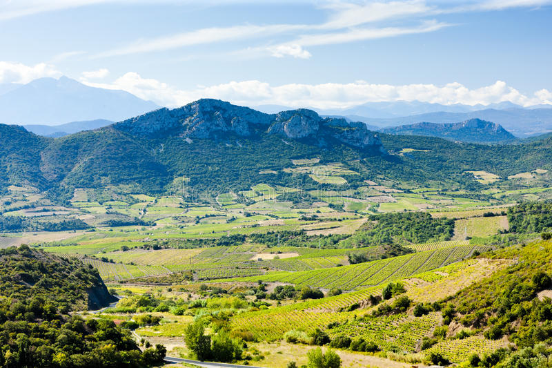 Vineyars, Languedoc-Roussillon photos libres de droits