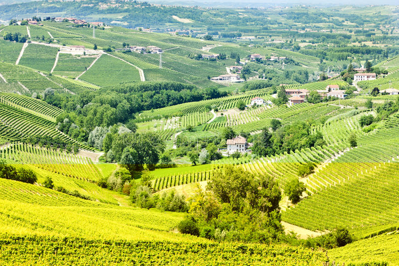 Download Vineyars, Piedmont, Italy stock photo. Image of langhe - 27009430