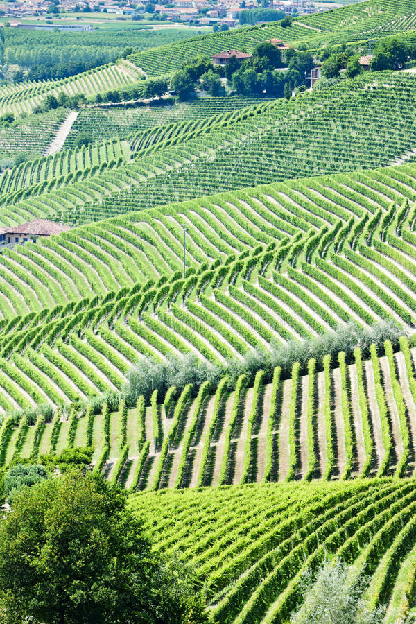 Download Vineyars, Piedmont, Italy Royalty Free Stock Images - Image: 27009469