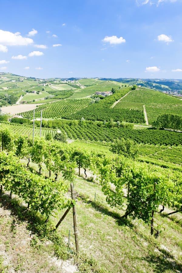 Download Vineyars, Piedmont, Italy stock photo. Image of arrangement - 27009478
