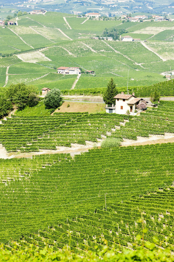 Vineyars, Piedmont, Italy Royalty Free Stock Photography
