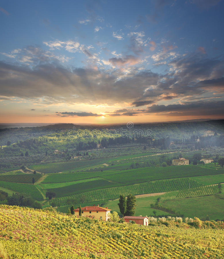 Vineyeard in Chianti, Tuscany, Italy, famous lands stock images