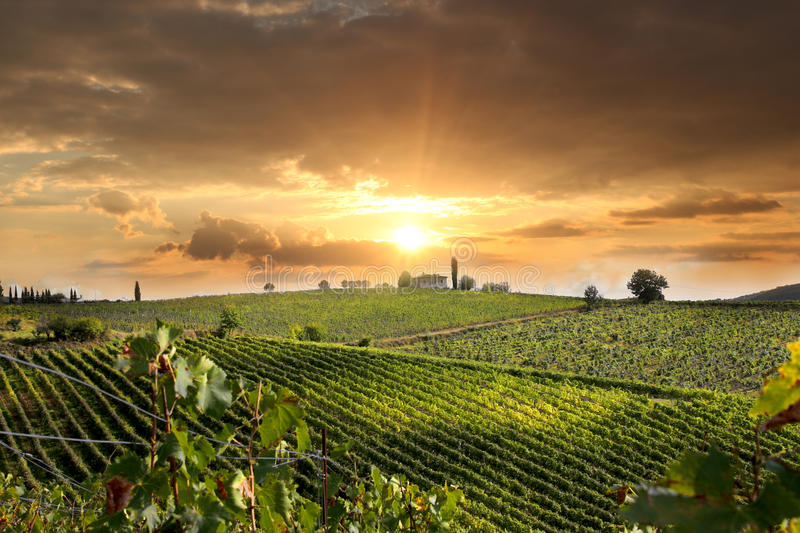 Vineyeard in Chianti, Tuscany, Italy, famous lands stock photo