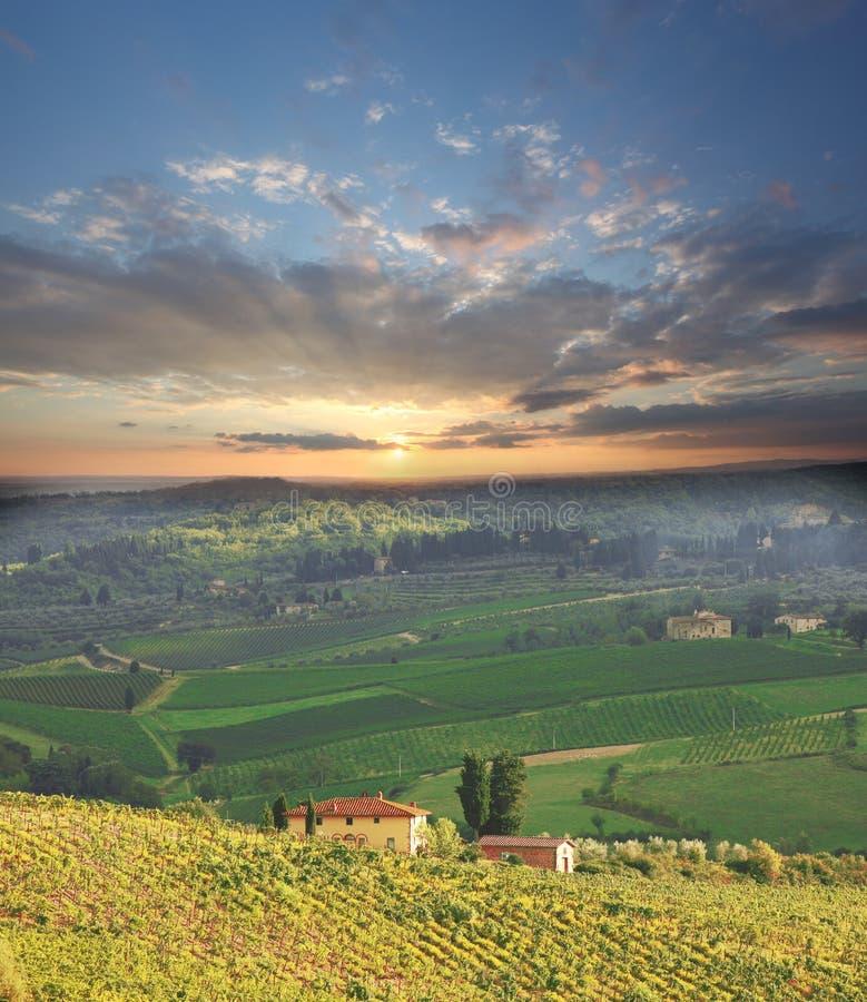 Vineyeard dans Chianti, Toscane, Italie, cordons célèbres images stock